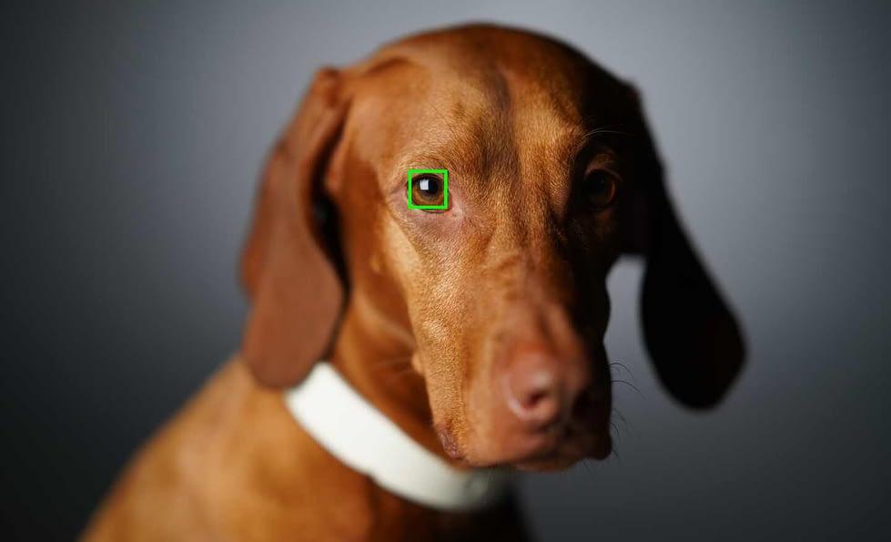 Sony a7R IV Real Time Eye AF
